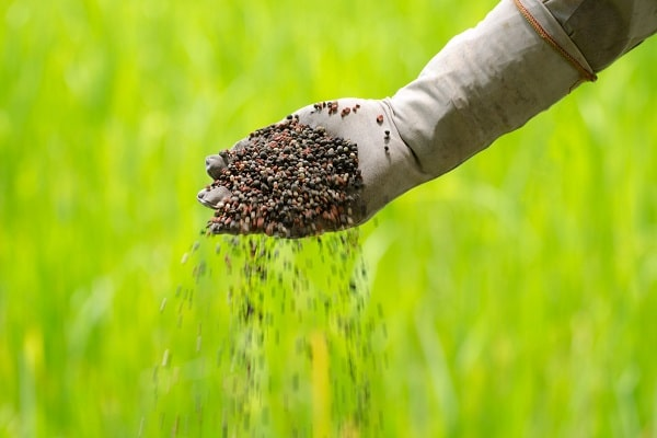 Organic fertilizer pouring with farmer hand beautiful green lawn in the background