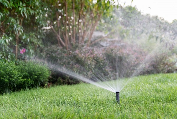 lawn with sprinkler in foreground and shrubs in background